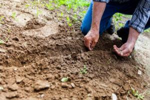 OTvest-planting_seeds